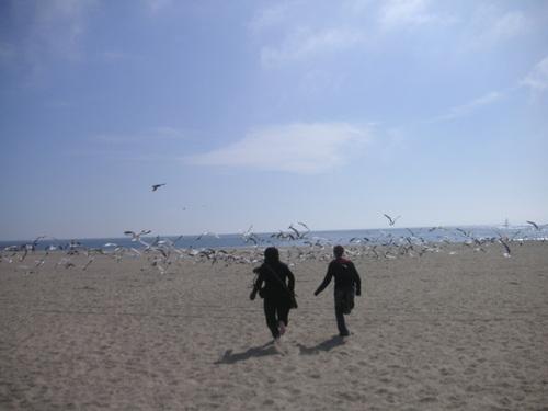Venice Beach, avec les mouettes!