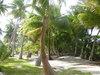 Tahiti0806_1334